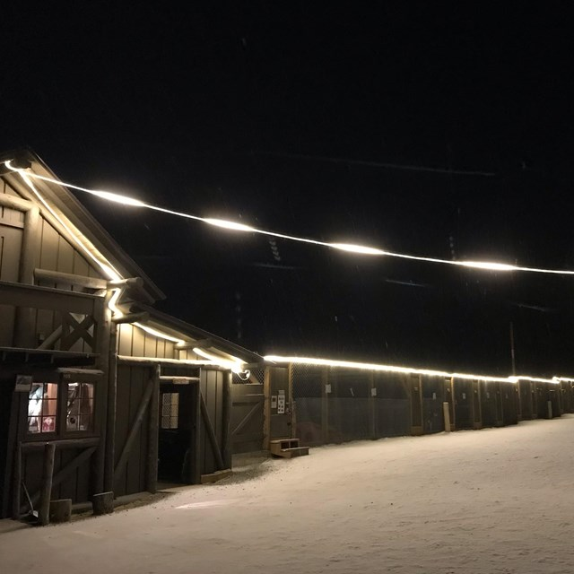 dark night in a snowy dog-yard with lights illuminating a building