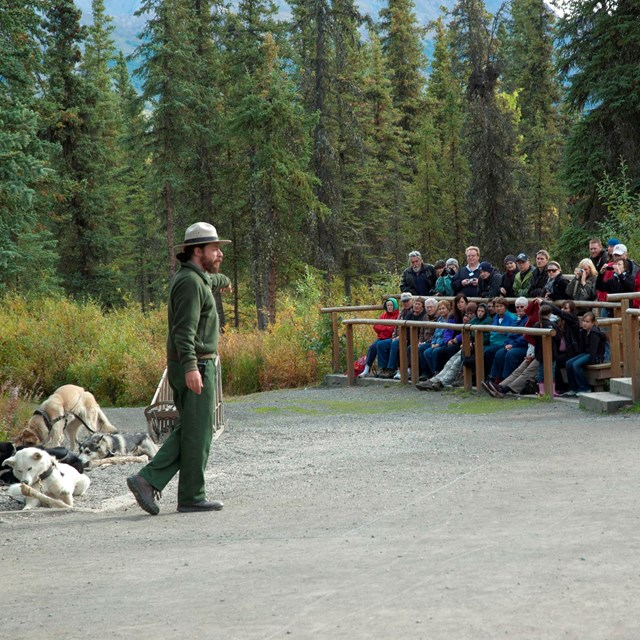 male ranger standing in front of several dogs while speaking to a group of people