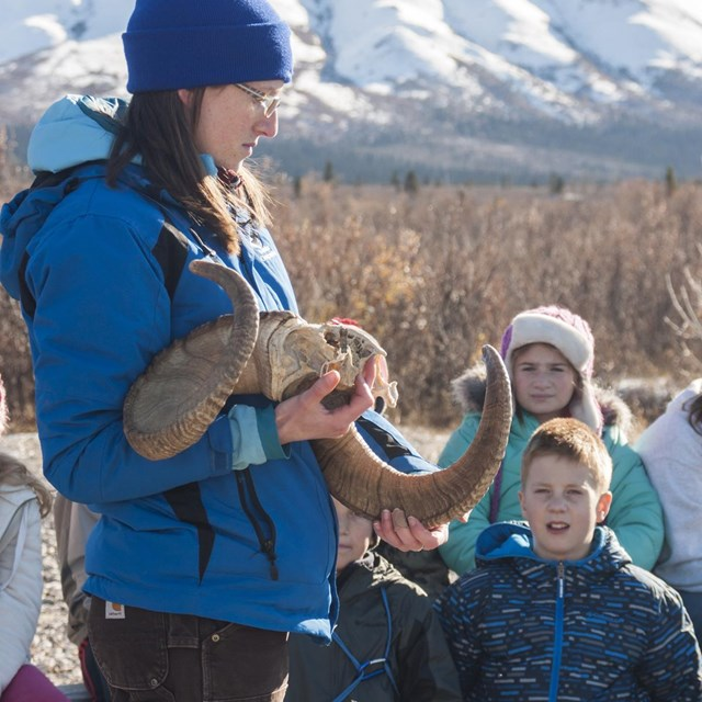 an instructor holds a Dall Sheep skull while students watch