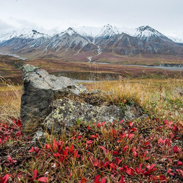 bright red leaves in a field with snow capped mountains in the background