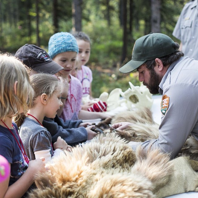 a group of campers examine a bear pelt with a park ranger