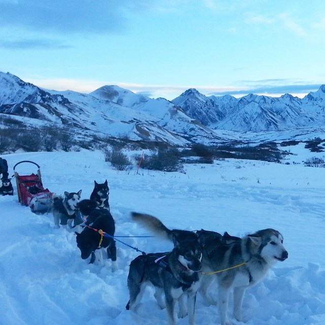 a team of dogs pulling a sled through a snowy landscape