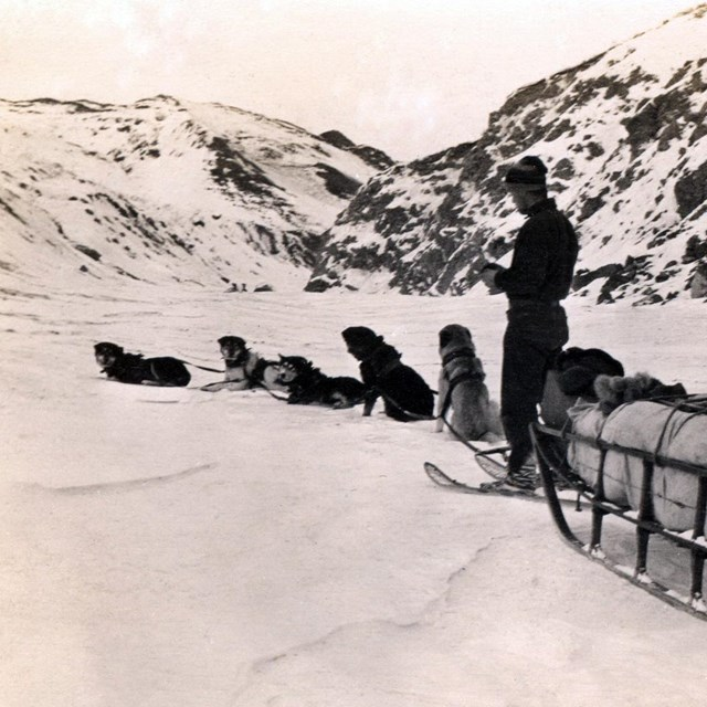 historic black and white image of a man standing next to a team of dogs and large sled