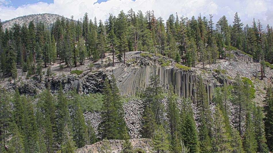 From a distance, tall basalt columns form the Devils Postpile formation and is surrounded by trees.