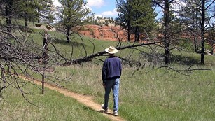 Trail winding through grass and trees with man walking and red cliffs in the background