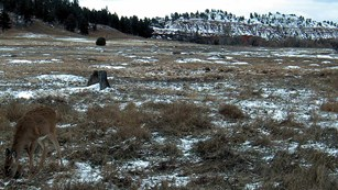 A grassy field with a deer and snow covered cliffs in background