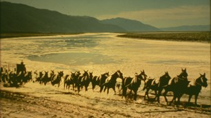 A train of mules, in pairs, leading a wooden wagon through a desert landscape.