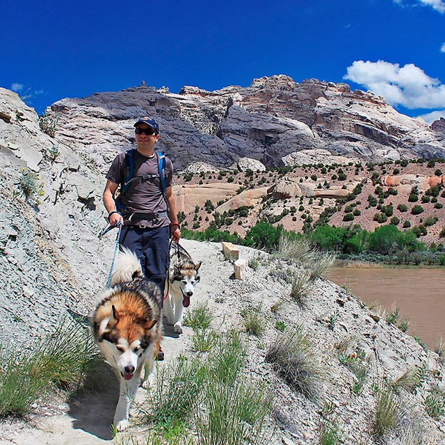 Man on trail with two large dogs. River and rocky mountain in the background