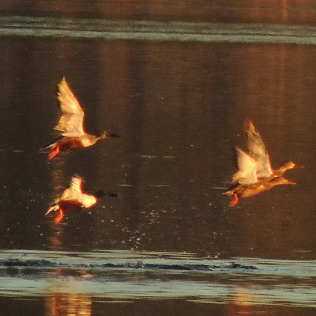 a flock of birds take off from crockett lake