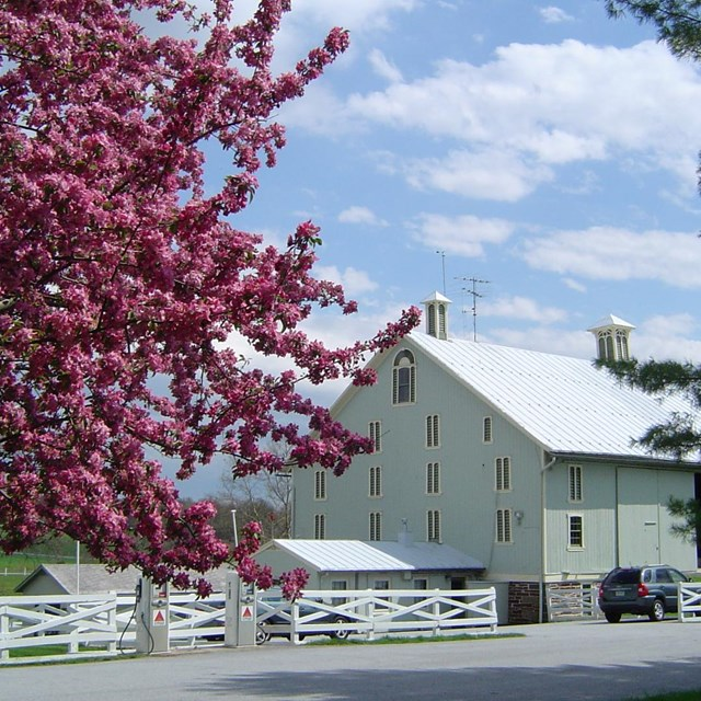 Photo of Eisenhower's barn with a beautiful bloomed tree on the left.