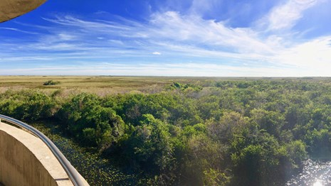 Virtually Experience the Everglades