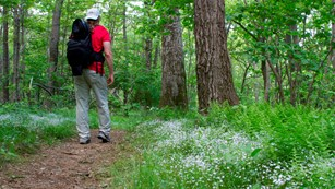 Hiker in woods with white flowers along the path