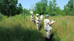 Line of volunteers surveying in a high grass meadow