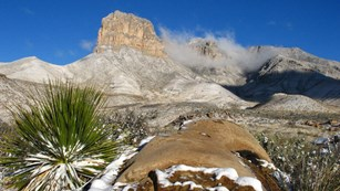 mountain landscape and desert plants in winter dusted with snow