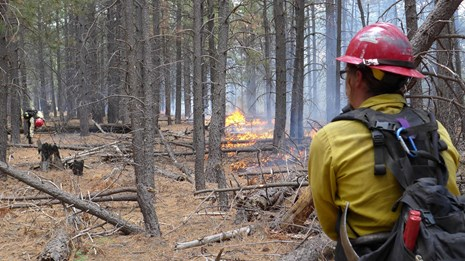 Firefighter monitoring the Deer Head fire at Saguaro National Park in Arizona.