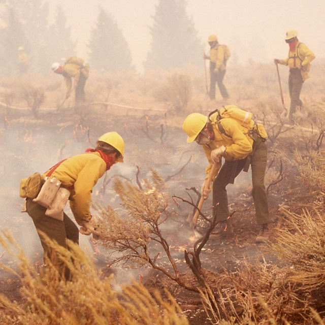 Wildland firefighters working in the field