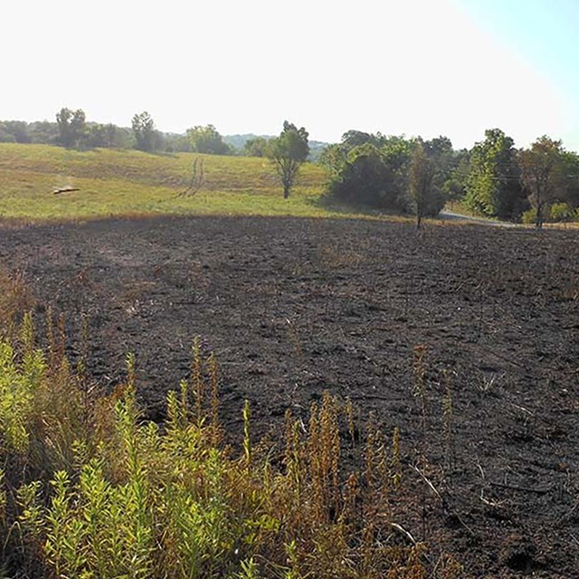 A recently burned meadow area.