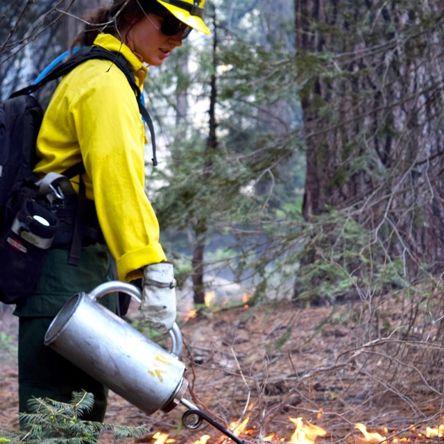 A firefighter uses a driptorch for prescribing fire.