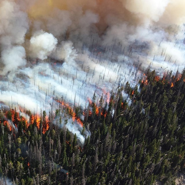 Aerial view of large wildfire in forest with torching trees and smoke.