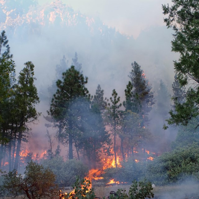 The Nature Trail prescribed fire, completed in the late fall of 2011 was key to fuels reduction in C