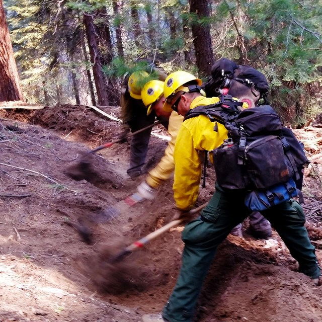 Firefighters create fireline in a national park.