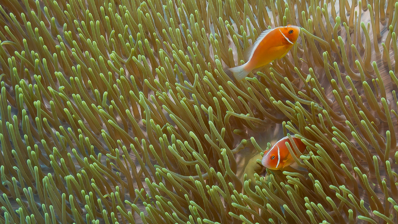 Fish in corals
