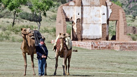 An 1800s soldier in blue wool holds two camels with packed saddles on the fort grounds.