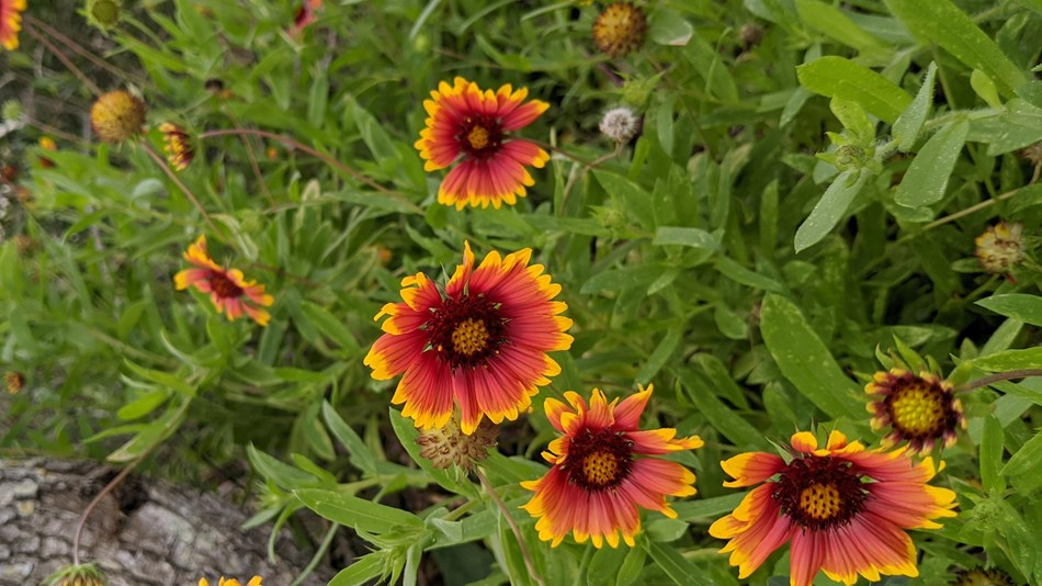 Image of wildflowers with vibrant colors, like red and yellow.