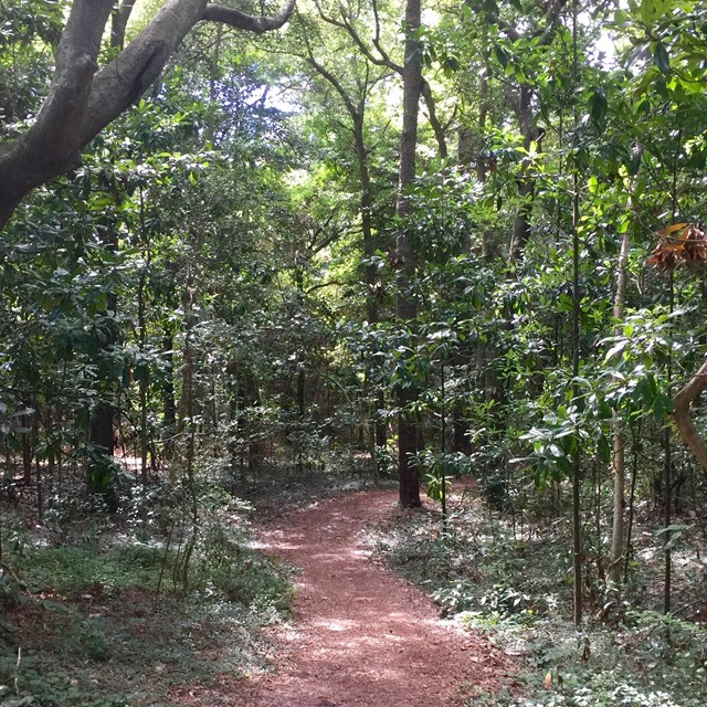 Wooded path at Fort Raleigh