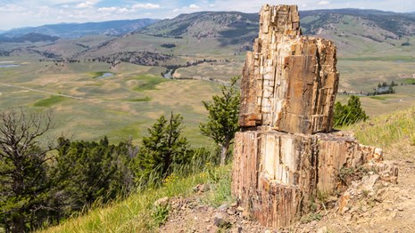 a fossilized tree stump standing on the edge of a cliff looking out onto a green valley.