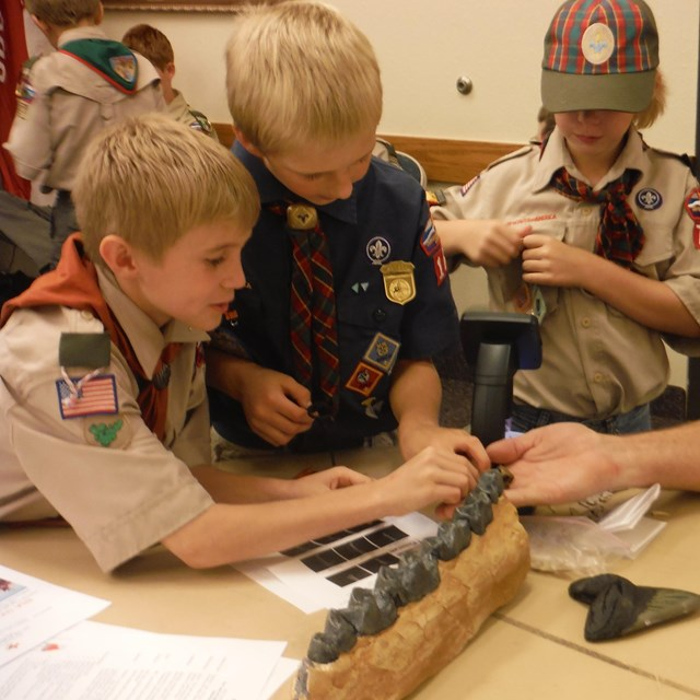scouts looking at fossils