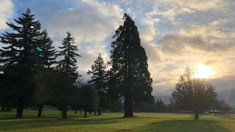 Photo of the sunrise over trees at Fort Vancouver.