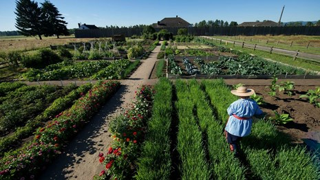 A volunteer works in the garden in front of Fort Vancouver.