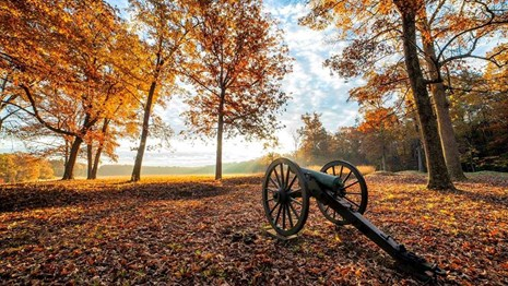 Cannon among fall leaves at Saunders Field on the Wilderness Battlefield