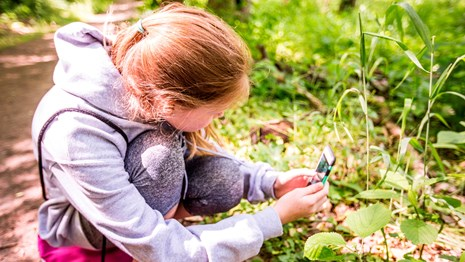A girl uses her cell phone to identify a green plant.