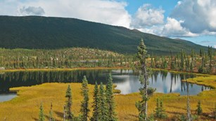 Black spruce surround a tundra pond in the mountains