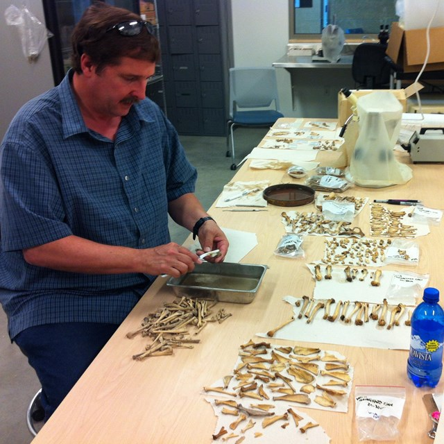 scientist sorting fossil bones