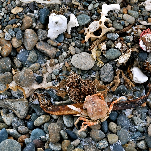 pebbles and wrack material