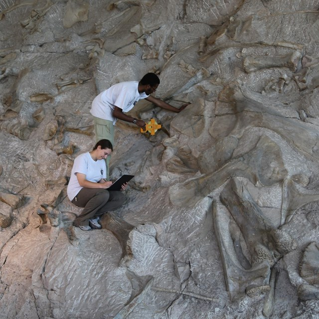 geologists on dinosaur quarry wall
