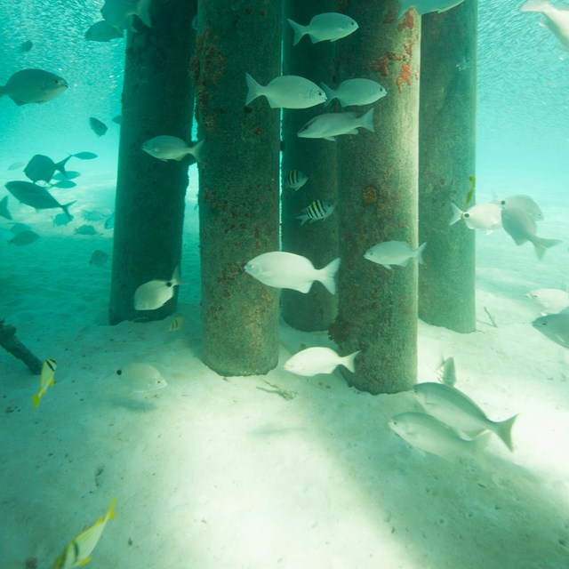 underwater fish and pier