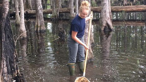 person in swamp using a net to sample aquatic organisms