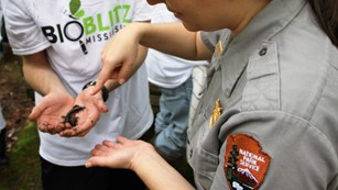 Park ranger pointing to salamander in hand
