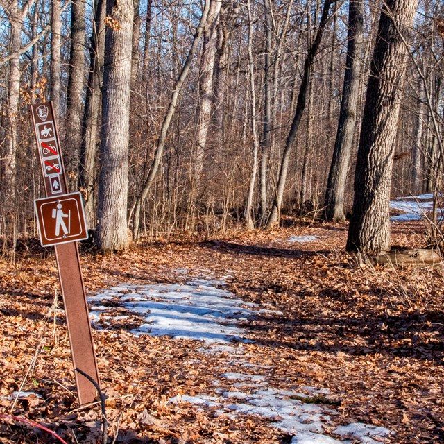 A horseback riding trail winds through the woods. There is little bit of snow on the ground.