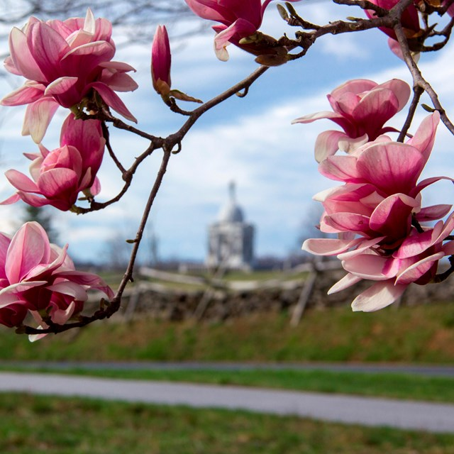 The Pennsylvania Memorial is visible in the distance through a pink flowering tree.