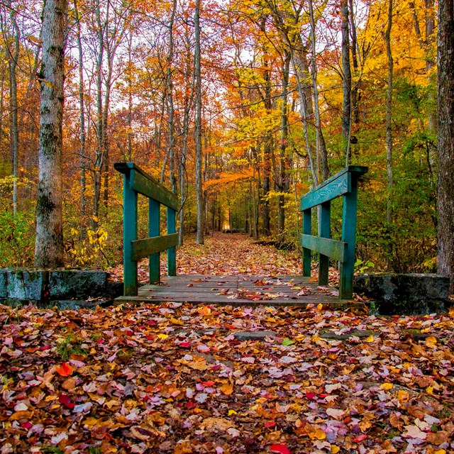 A small green footbridge is in the center and is surrounded by colorful fall trees and leaves.