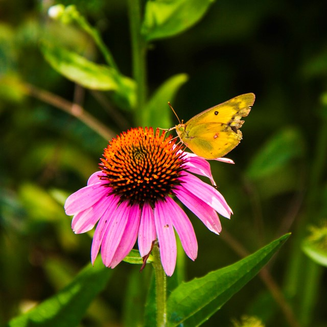 A yellow butterfly sits on a pink and orange flower amidst green grass.