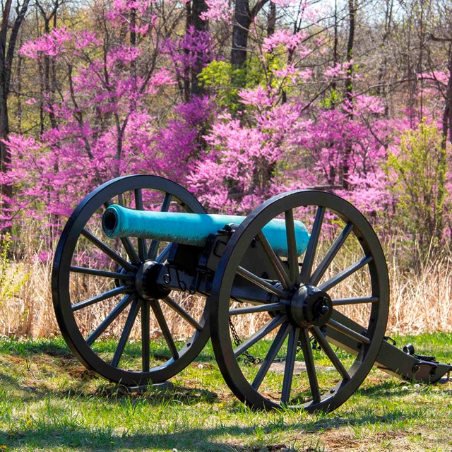 A red bud tree is in full bloom behind a cannon on the battlefield.