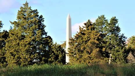 White obelisk, surrounded by trees, rising above a grassy slope