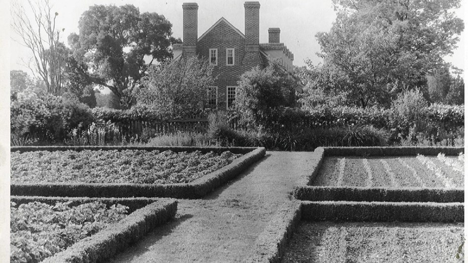 The colonial garden as it appeared in 1936