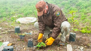 VIP helps revegetation project up in the alpine section of the park.